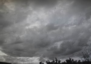 Gorse Sky